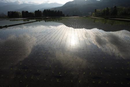 田植えの終わった水田