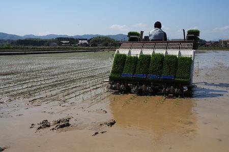 機械化された田植え