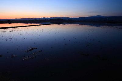 柴山潟近くの水田から