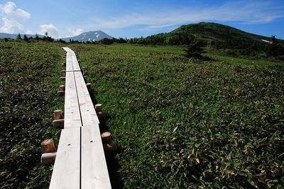 百四丈滝展望台分岐付近の木道
