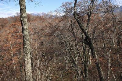 杉峠-赤兎山間から見た白山