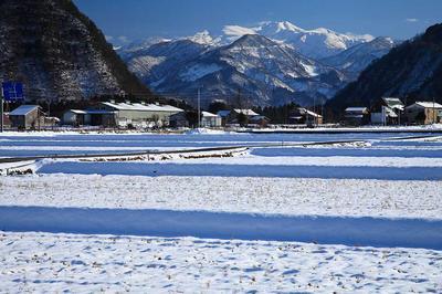 上野町付近から見た白山