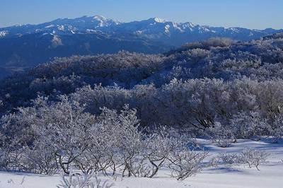 樹氷がびっしり