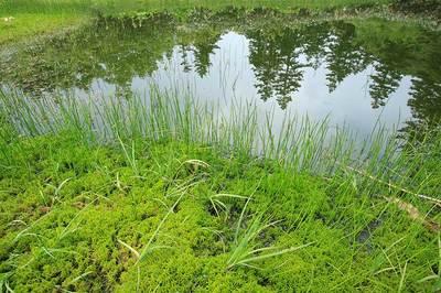 もうせん平の池塘