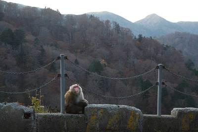 スーパー林道の猿