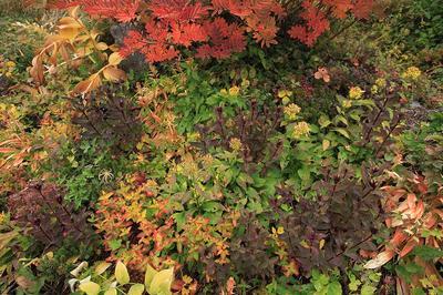 御花松原の草紅葉