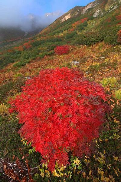 御花松原の紅葉