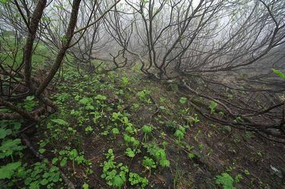 雪解け直後のナナカマドの林床