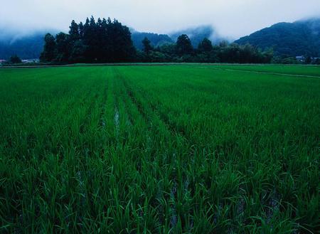 梅雨時の田園