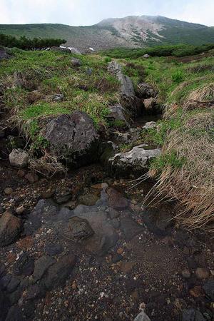 お花畑コースから流れ出す水