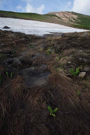 お花畑コースの雪渓から流れ出す水2