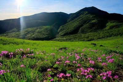 ハクサンコザクラと四ツ塚山