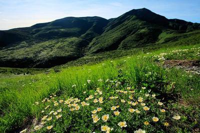 チングルマと四ツ塚山