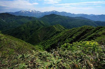 法恩寺山~経ヶ岳間の稜線から見た白山